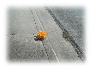 Цветок +